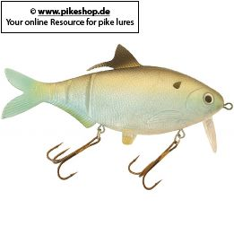 Farbe: RS Gizzard Shad